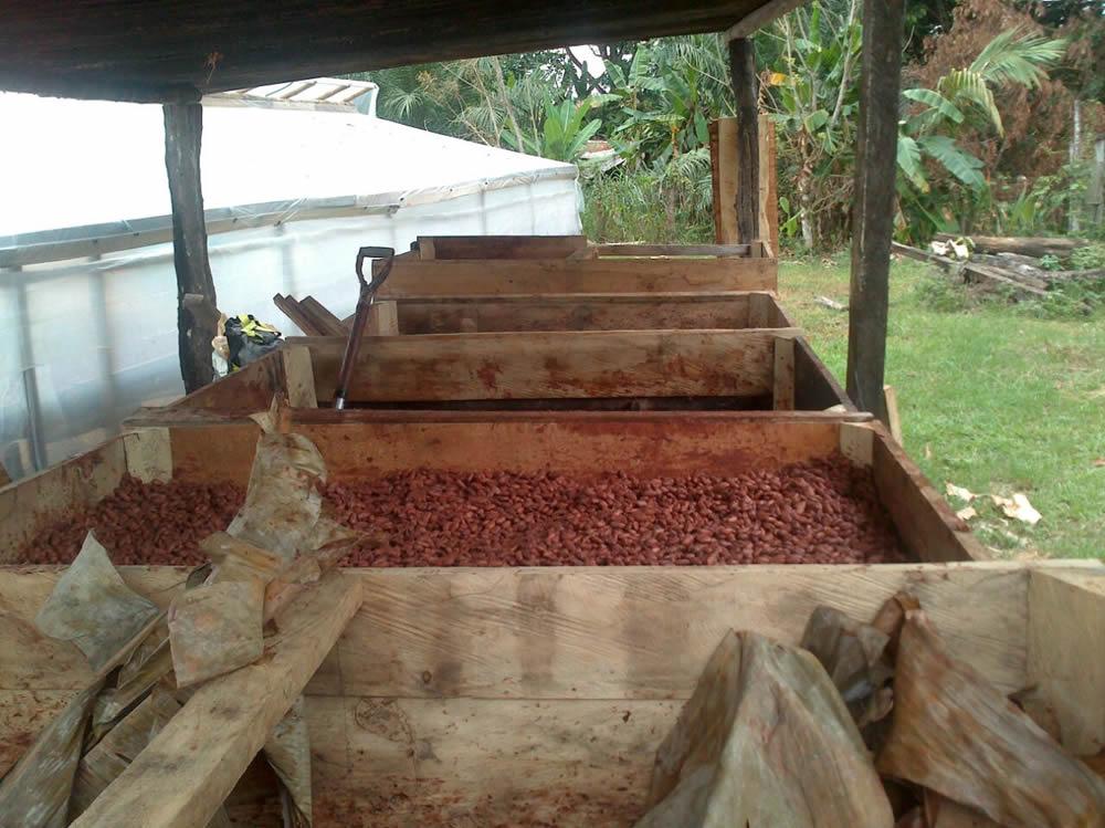 Cajones de fermentacion 10