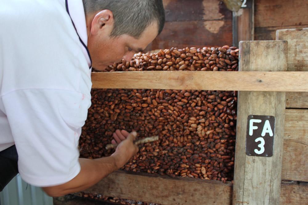 Cajones de fermentacion 5
