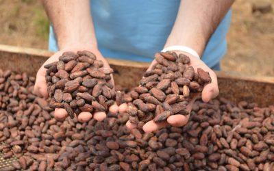 Una definición provisional de Cacao Fino o de aroma
